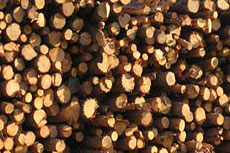EPA defers biomass permitting decision